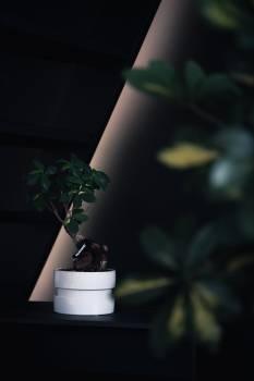 Vase Container Plant Free Photo