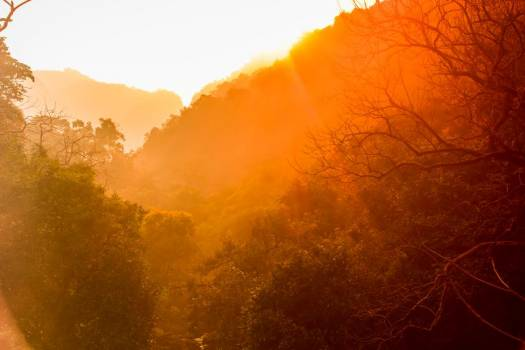 Golden Sunrise Over Tree-Lined Hills #419422