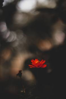 A Red Flower Against A Blurry Bokeh Background #419437