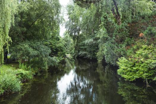 River surrounded with green trees and plants #419501