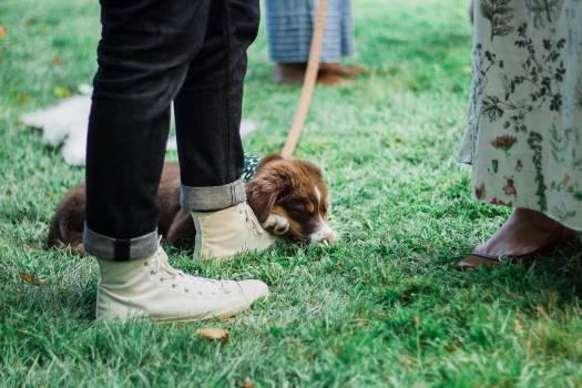 Spaniel Dog Sporting dog #419574