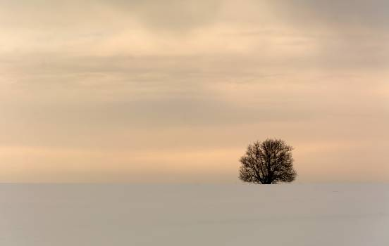 Minimalist Winter Tree - Free Image For Commercial Use #419593