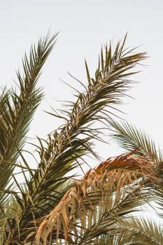 Tree Plant Vascular plant #419602