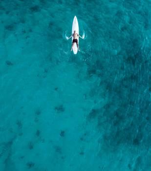 Ocean Sea Fish Free Photo