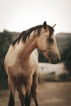 Horse Thoroughbred Animal Free Photo