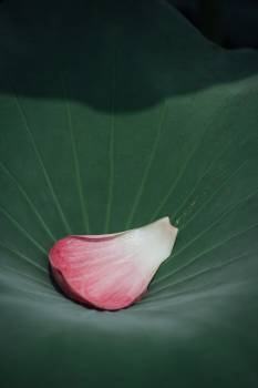 Vascular plant Plant Arum #419888