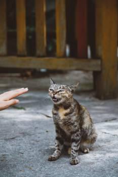 Cat Feline Lynx #419890