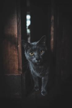 Kitten Cat Feline #419900