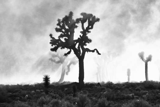 Yucca Shrub Woody plant #419937