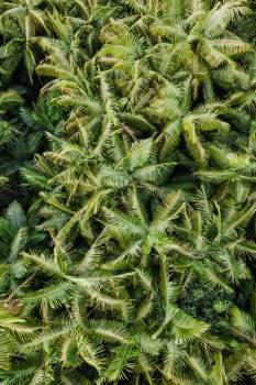Club moss Fern ally Plant #419946