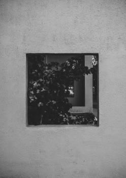 Old Frame Vintage #419961