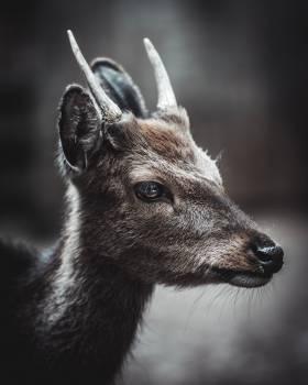 Ibex Wild goat Deer #420012