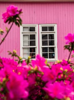 Flower Pink Plant #420013