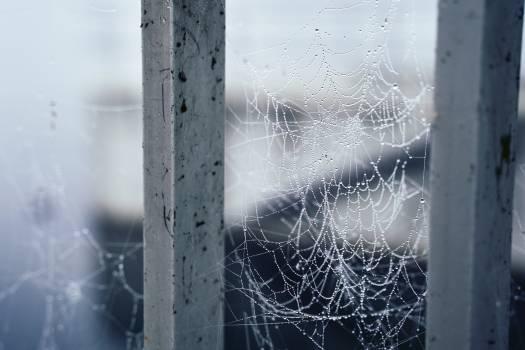 Spider web Cobweb Web #420031