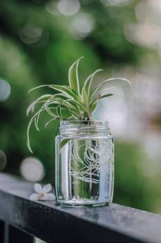 Glass Jar Plant Free Photo