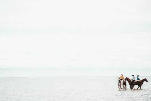 Horses In The Sea #420126