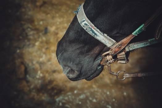 Horse Wears Bridle #420127
