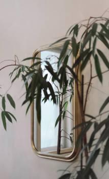 Tree Plant Vascular plant #420213