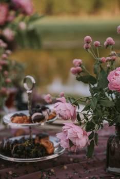 Pink Flower Flowers #420226