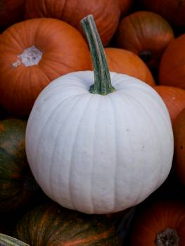 Pumpkin Squash Vegetable Free Photo