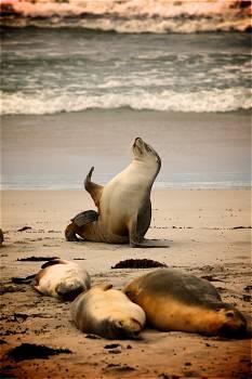 Sea Lion on Near Seashore during Daytime #42030