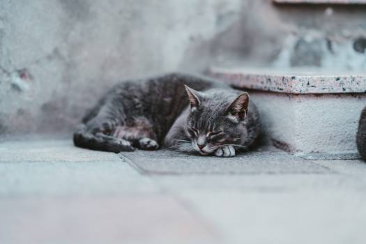 Tabby Kitten Cat Free Photo