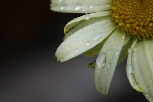 Petal Flower Plant #420426