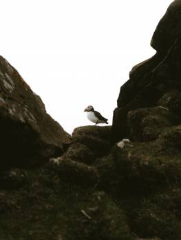 Seabird Rock Mountain #420442