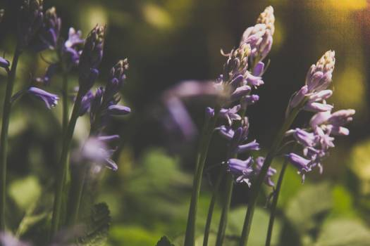 Herb Vascular plant Plant #420550