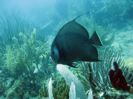 Coral reef Reef Underwater #420650