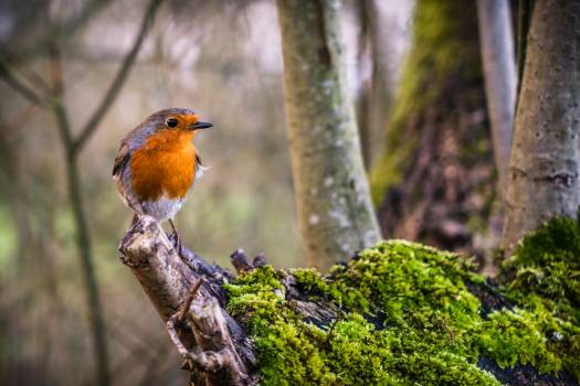 Colorful Bird Perched Free Photo Free Photo