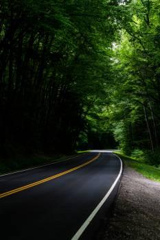 Road Bend Asphalt Free Photo