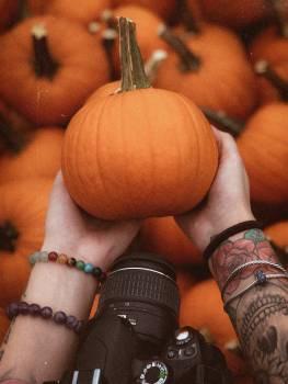 Pumpkin Vegetable Produce Free Photo