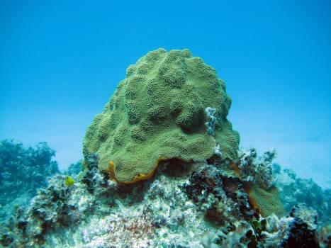 Coral reef Reef Ridge #420830