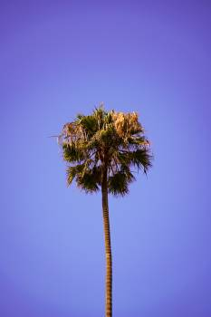Tree Woody plant Palm #420844