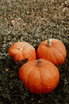 Pumpkin Squash Vegetable #420862
