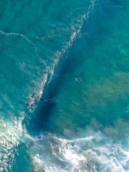 Great white shark Shark Ocean #420890