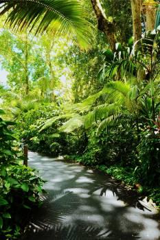 Tree Woody plant Vascular plant #420976
