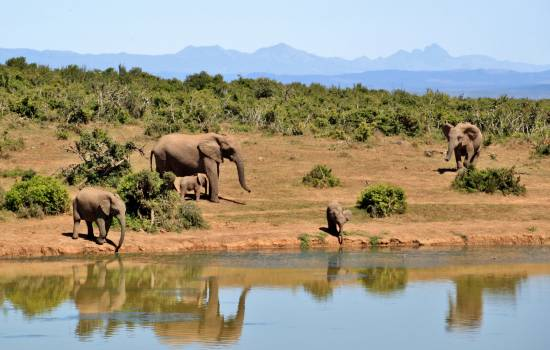 Gray Elephants Near Body of Water during Daytime #42106