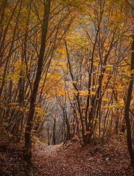 Birch Tree Poplar #421099