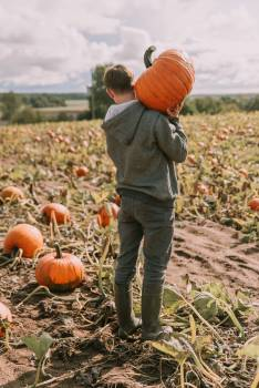 Pumpkin Vegetable Produce #421187