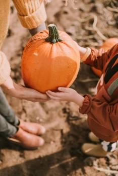 Pumpkin Squash Vegetable #421218