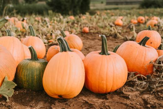 Pumpkin Squash Vegetable #421254