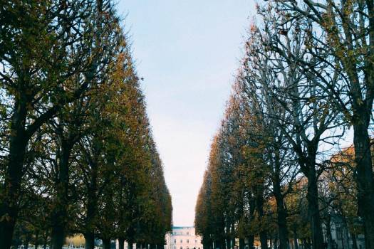 Pruned Trees Line A Path Leading To A Mansion #421314