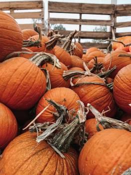 Pumpkin Vegetable Squash #421381