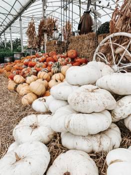 Pumpkin Squash Vegetable #421393