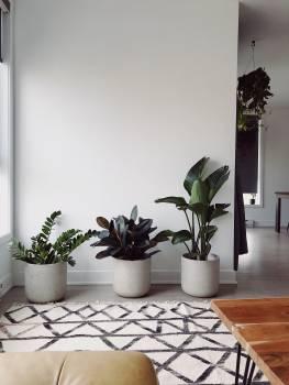 Interior Vase Room #421586