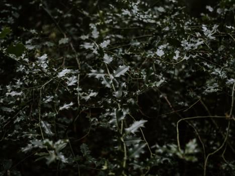 Tree Woody plant Spider web #421595