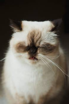 Beautiful Cat Sticking Its Tongue Out #421691