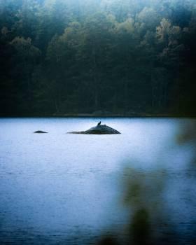 Water Landscape Boat #421740